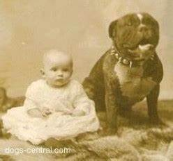 pitbulls used be considered perfect nanny dogs children until media turned them