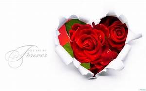 Valentine Day Roses Wallpaper HD Wallpaper   Flowers ...