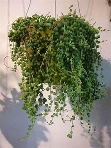 Plante Suspendue Intérieur : comment entretenir les plantes vertes ~ Teatrodelosmanantiales.com Idées de Décoration
