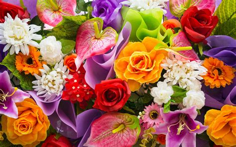 colorful flowers beautiful colorful flowers wide 134969105 wallpapers13