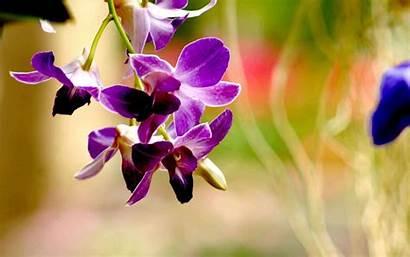 Orchid Flower Purple Wallpapers Resolution Flow 10wallpaper