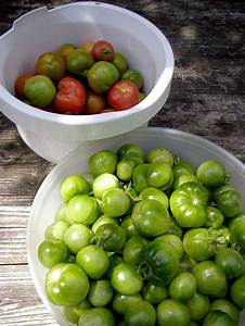 Grüne Tomaten Nachreifen : braunf ule gr ne tomaten und ein chutney gartenblog ~ Lizthompson.info Haus und Dekorationen