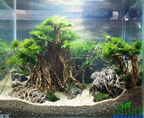 Aquascaping Tropical Fish Tank by Pin By Ranjeet Akolkar On Aquarium Aquarium Biotope