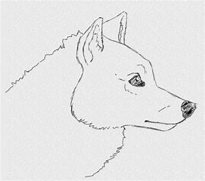 How to Draw an Easy Realistic Wolf Head in Side View - YouTube