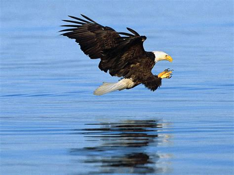 Cat And Dog Photos Bald Eagle Wallpapers Animals Library