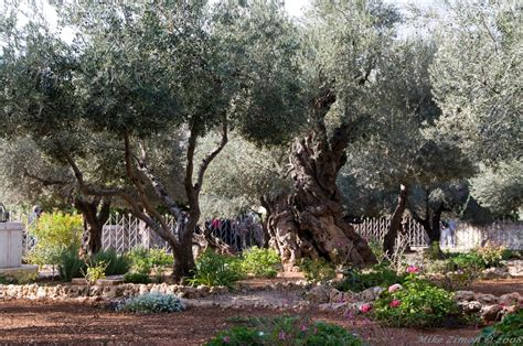 Garden Of Gethsemane And Basilica Of The Agony