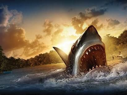 Shark Cool Wallpapers Away Backgrounds Wallpaperaccess