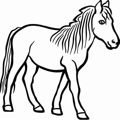 Horse Clipart Simple Clip Head Drawing Outline