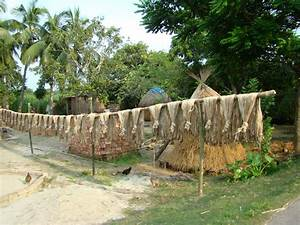File:Jute Cultivation and Processing Bangladesh.JPG ...