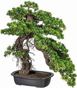 kunstpflanze, , u00bbbonsai, podocarpus, u00ab, online, kaufen