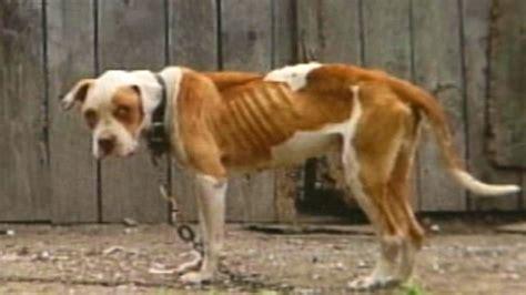 petition philippine animal welfare society paws