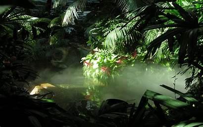 Wallpapers Jungle Background Pixelstalk Nature