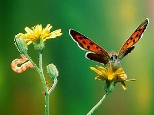 Amazing Natural Pictures,Seeneries,Wallpapers, Sceneries ...