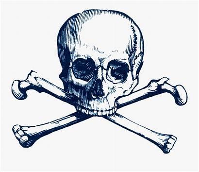 Jolly Roger Clipart Skull Crossbones Death Number