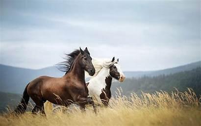 Wild Horse Horses Wallpapers Animals Samsung