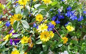 Blumen Im Frühling : foto von gelben blumen im fr hling hd hintergrundbilder ~ Orissabook.com Haus und Dekorationen