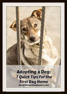 adopting a dog 7 quick tips for the first day home With adopting a dog tips