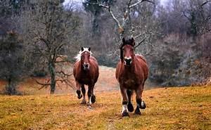 Bilder Von Pferden : pferd bilder pixabay kostenlose bilder herunterladen ~ Frokenaadalensverden.com Haus und Dekorationen