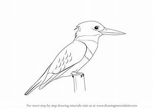 Learn How to Draw a Kingfisher (Birds) Step by Step ...