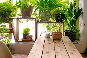 The, Ultimate, Guide, To, Indoor, Plants