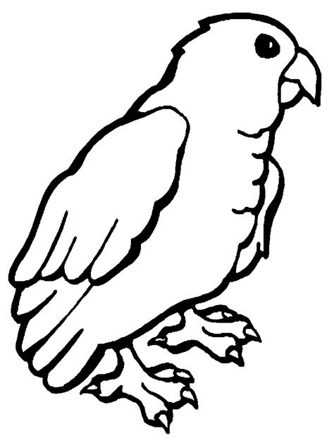 printable parrot coloring pages  kids