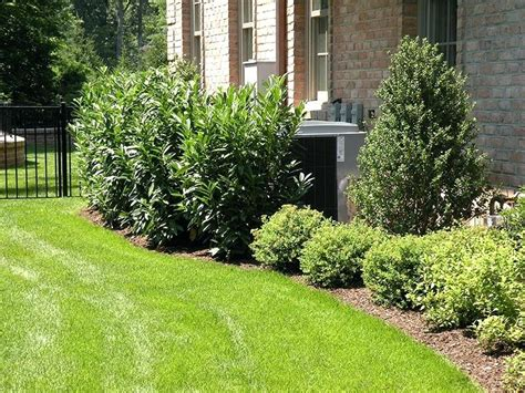 landscaping ideas for the side of the house side of house garden design with landscaping vegetable on ideas growing along the shrubs