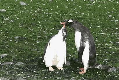Cruise Antarctica Mr Adventure Harper Penguin