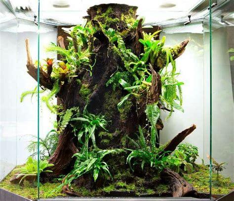 perfect  darts frog terrarium gecko terrarium