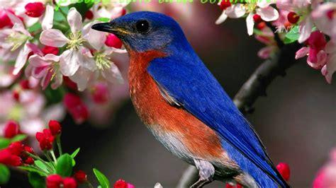 beautiful flowers p hd linkin park