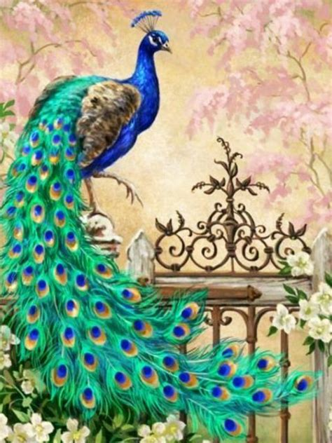 peacock hd wallpapers backgrounds wallpaper hd