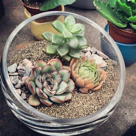 New Succulent Terrariums - Cactus Jungle