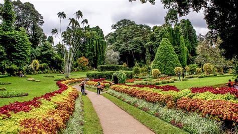 Botanischer Garten Sri Lanka peradeniya botanical gardens kandy andbeyond