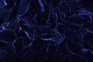 Dark Blue Flowers Tumblr Wallpaper High Quality Wallpaper ...