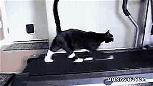 Cat Walking GIF - Find & Share on GIPHY