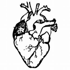 6 Organ Drawing Drawn Heart For Free Download On Ayoqq Org