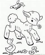 Coloring Sheep Pages Coloringpages101 sketch template