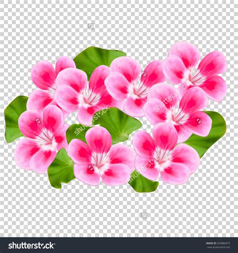Image Without Background Flowers Without Background Clipground