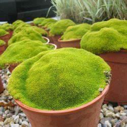 Plante Pour Jardin Japonais : les 38 meilleures images du tableau plantes pour jardin ~ Dode.kayakingforconservation.com Idées de Décoration