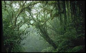 Tropical Rainforest And Monsoon Forest