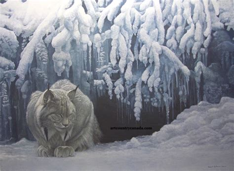 art country canada robert bateman dozing lynx giclee