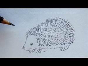 Zeichnen Lernen Mit Bleistift : zeichnen lernen igel zeichnen einfache anleitung tiere mit bleistift zeichnen diy youtube ~ Frokenaadalensverden.com Haus und Dekorationen