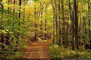 Foret à Bois : photo du jour promenons nous dans les bois photo le blog ~ Nature-et-papiers.com Idées de Décoration