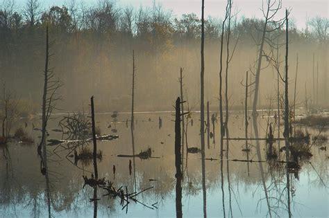 photo 472 26 a swy pond in sapsucker woods sanctuary