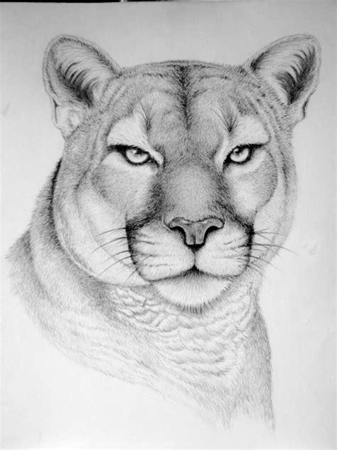 wild animal drawings  behance