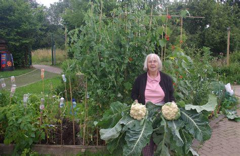 lotus garden restaurant knoxville tn square foot gardening ing uk garden ftempo