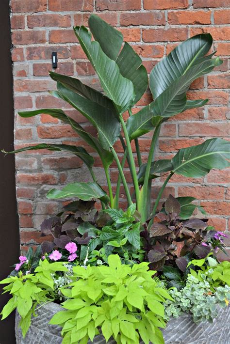 17 best images about container gardens on container gardening planters and