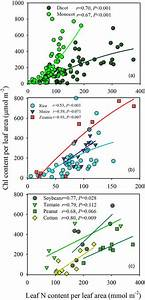The Relationship Between Chlorophyll Content Per Leaf Area