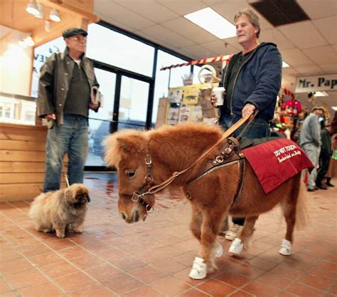 miniature horses ada horse its according dining room law mini guide service animal animals ponies dogs pony illinois course theridgewoodblog
