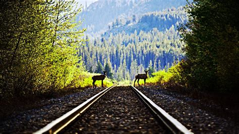 Wallpaper And Backgrounds Railroad Wallpapers Backgrounds