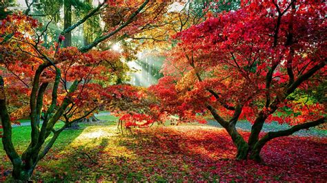 trees forest sun rays fall leaves red leaves path
